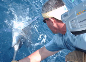 Releasing a blue marlin on an Rudee Inlet charter.
